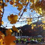 Esercitazione-Provinciale-Appennino-Reggiano-11-12-novembre-44